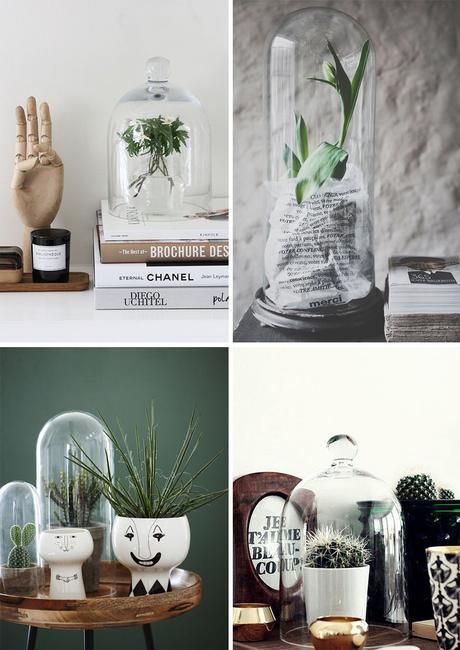 Que mettre sous une cloche en verre for Plante sous verre