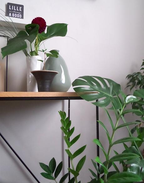 Urban jungle bloggers : plants & flowers