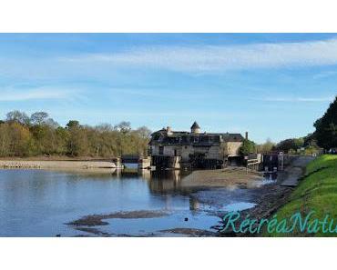 Couleurs d'Automne en Anjou : Balade sur les bords de la Mayenne en VTT entre Feneu et Grez-Neuville