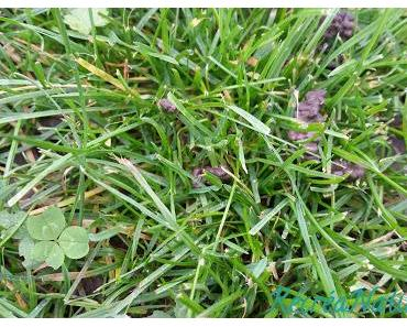 Devinette du Vendredi #9 : Une Scène Inhabituelle sur l'Herbe du Jardin