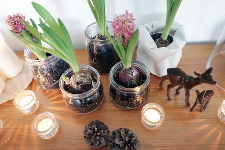 decoration de noel jacinthe. Black Bedroom Furniture Sets. Home Design Ideas