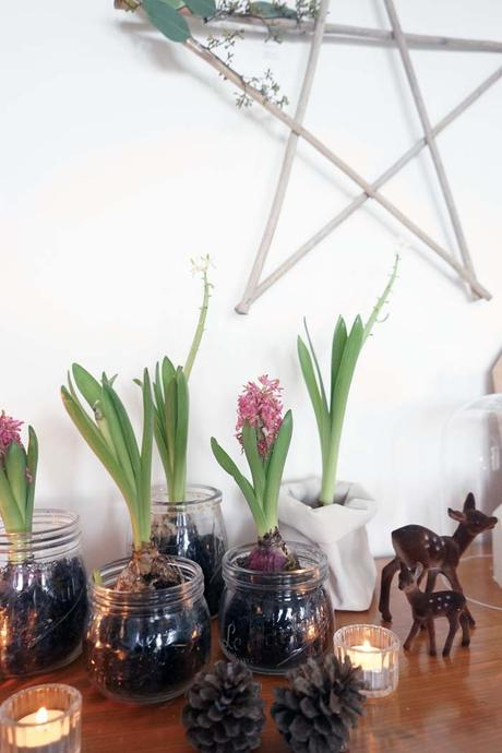 bocaux jacinthe ma d co de no l v g tale. Black Bedroom Furniture Sets. Home Design Ideas