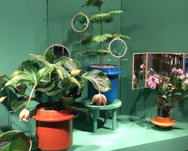 Dossofiorito ou l'art de sublimer les plantes