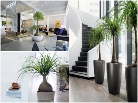 Bien choisir sa plante d int rieur - Plante interieur design ...