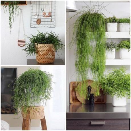 bien choisir sa plante d int rieur. Black Bedroom Furniture Sets. Home Design Ideas