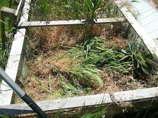 Comment planter dans un jardin envahi par les mauvaises herbes