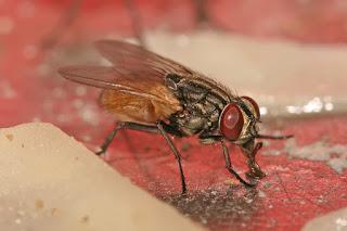 Comment se débarrasser des mouches naturellement ? Des méthodes écologiques