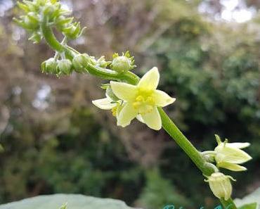 Devinette du vendredi #13 : Quelle est cette Fleur ?