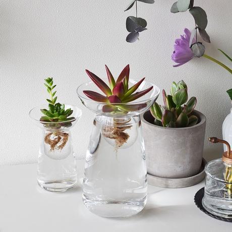 l 39 aqua culture ou l 39 art de faire pousser des plantes sans terre. Black Bedroom Furniture Sets. Home Design Ideas