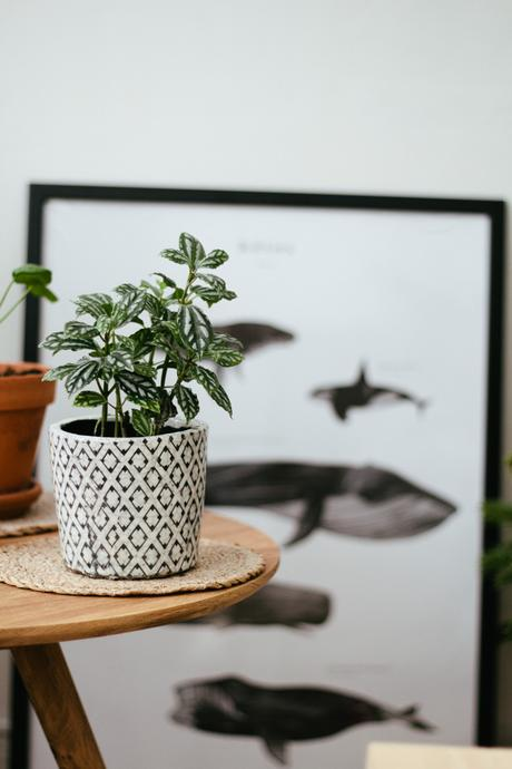 Zoom sur les plantes d'intérieur faciles d'entretien et très déco