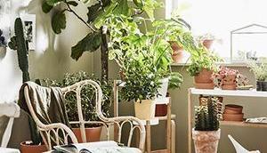 Pleine plantes... incontournable