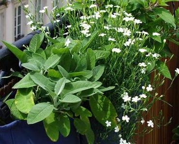 Préparons l'été : un balcon une idee jardiniere !