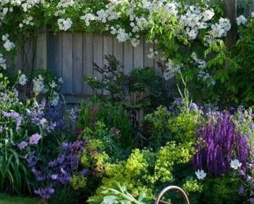 Comment prendre soin de nos plantes en été
