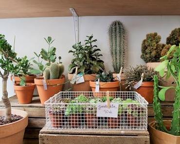 Paris, mes bonnes adresses / Le Cactus Club ... concept-store épineux  /