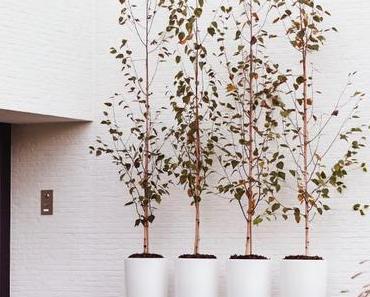 Elho : le pot écolo pour accueillir mes plantes