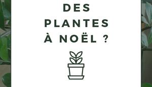 Pourquoi faire cadeau d'une plante Noël