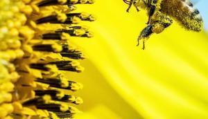 faire avec cire d'abeille
