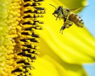 Que faire avec de la cire d'abeille ?